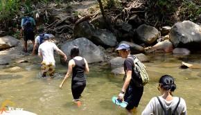 rainforest-tour